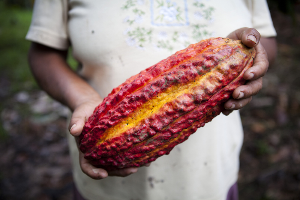The Price of Fairtrade Cocoa Is Going to Up to Help Get Farmers Out of Poverty