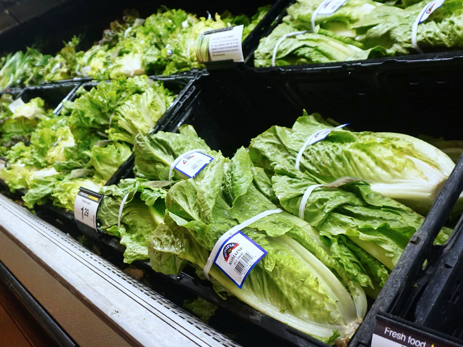 romaine-lettuce-update-FT-BLOG1118.jpg