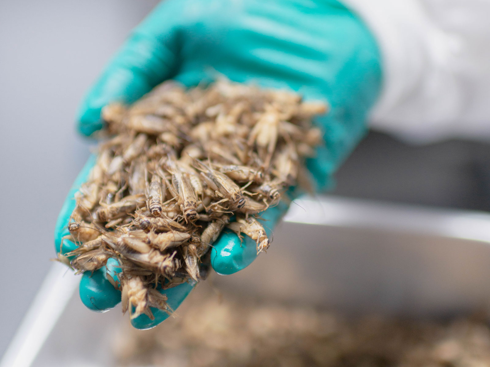 insect-farming-questions-FT-BLOG0119.jpg