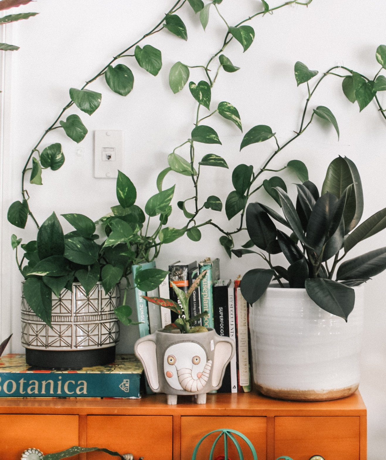 6 Faux Plants That Look Identical to the Real Deal