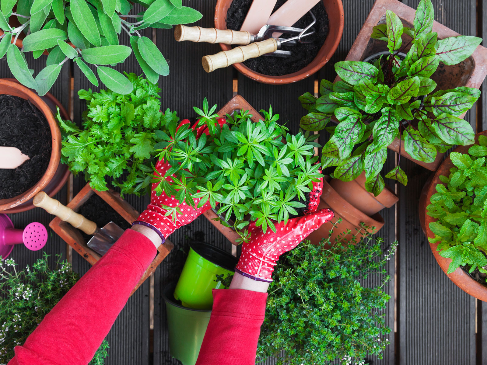 10 Tools You Need to Tend Your Organic Vegetable Garden