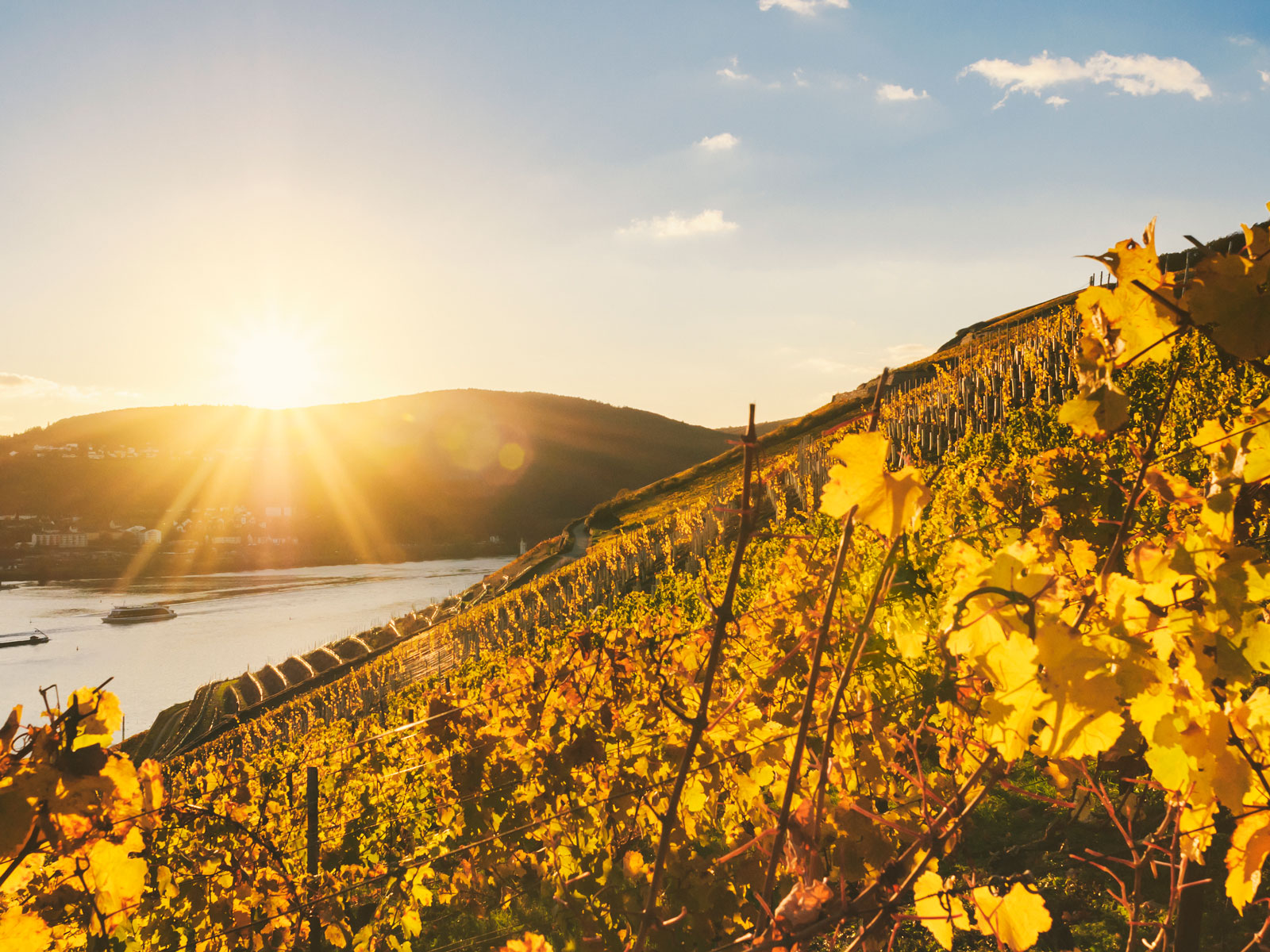 Scientists Create Future Climate Change Conditions in German Vineyard