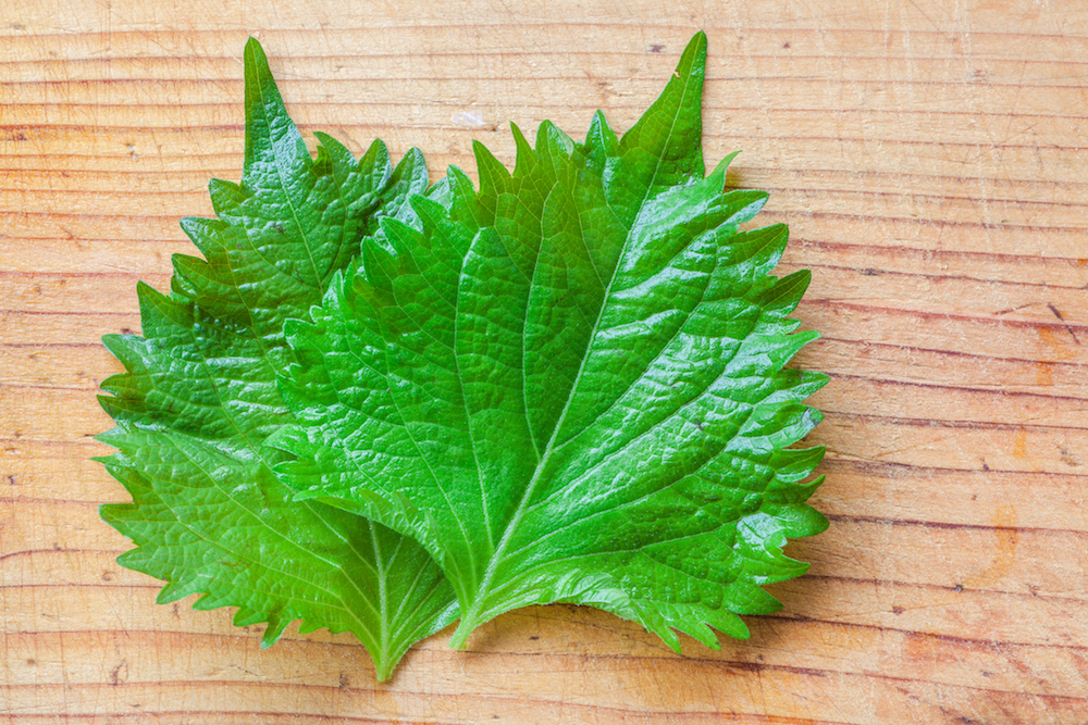 How to Use Shiso Leaf for Fresh, Fragrant Cocktails