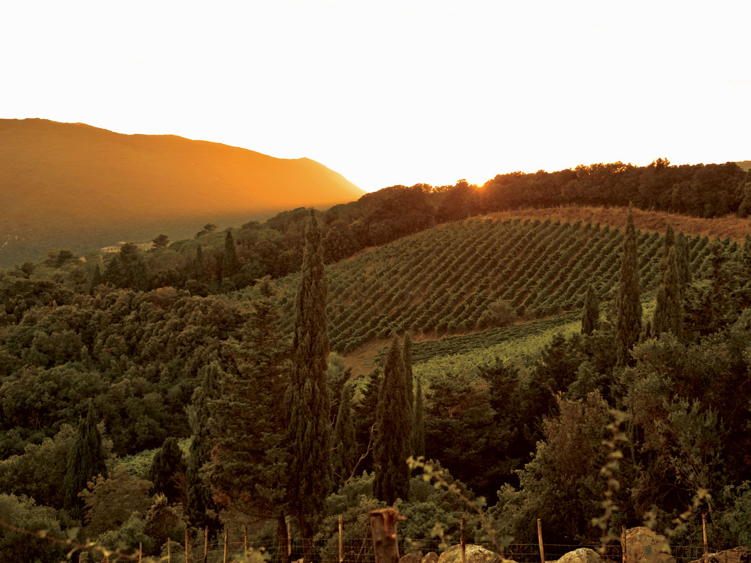 Italy Unfiltered: A Week of Food and Drink With the Country's Best Natural Winemakers