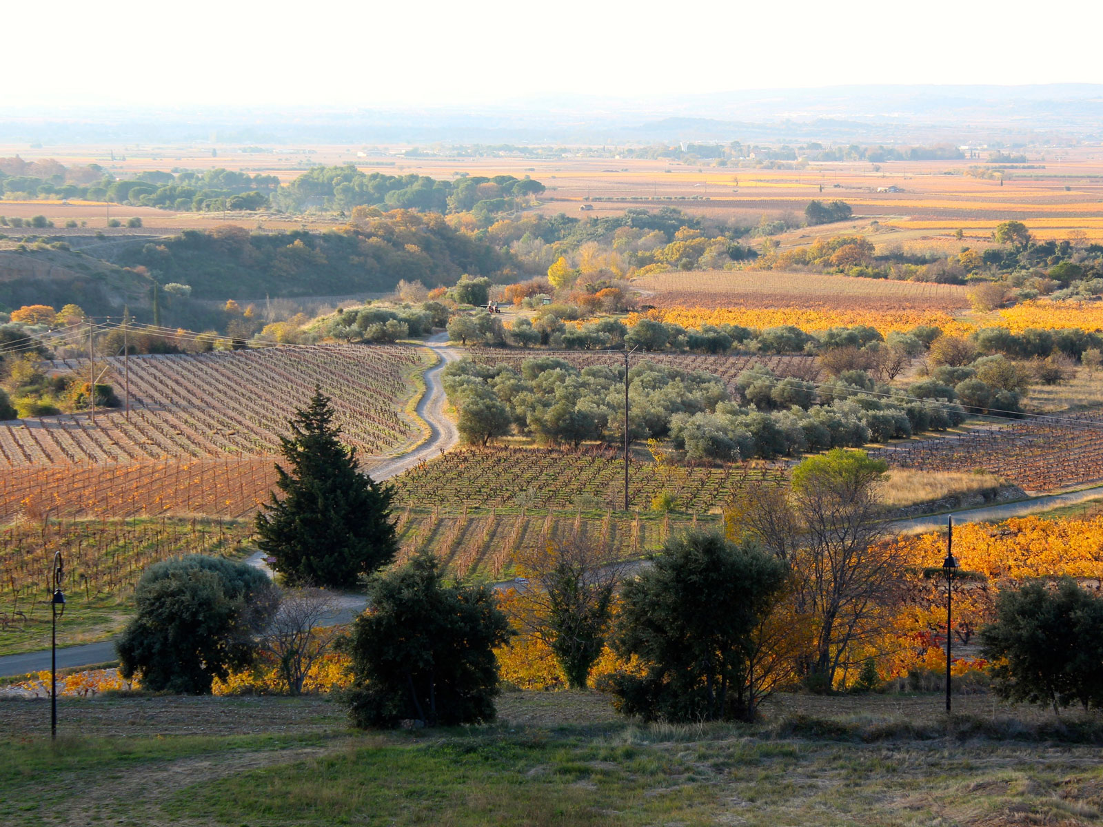 Vineyards of Domaine de la Reserve d'O