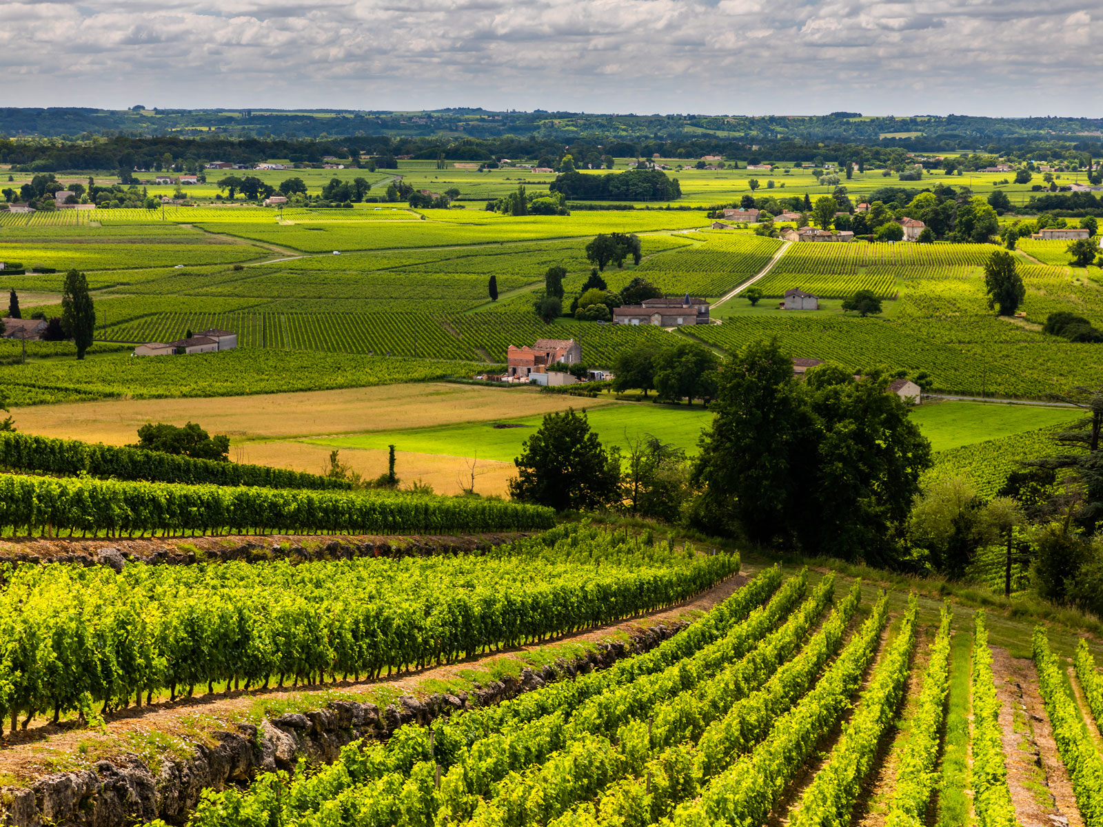 Bordeaux Region Makes Push Toward More Environmentally-Friendly Viticulture