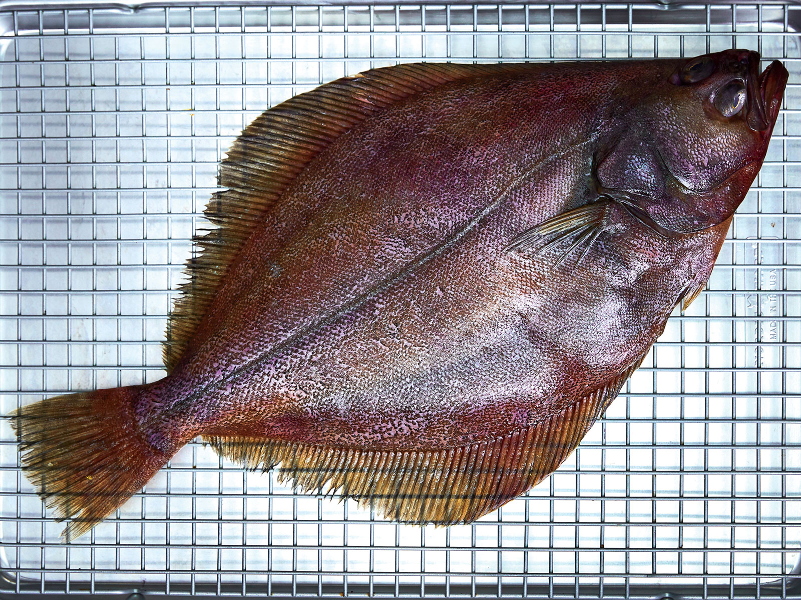 Grilled whole flatfish
