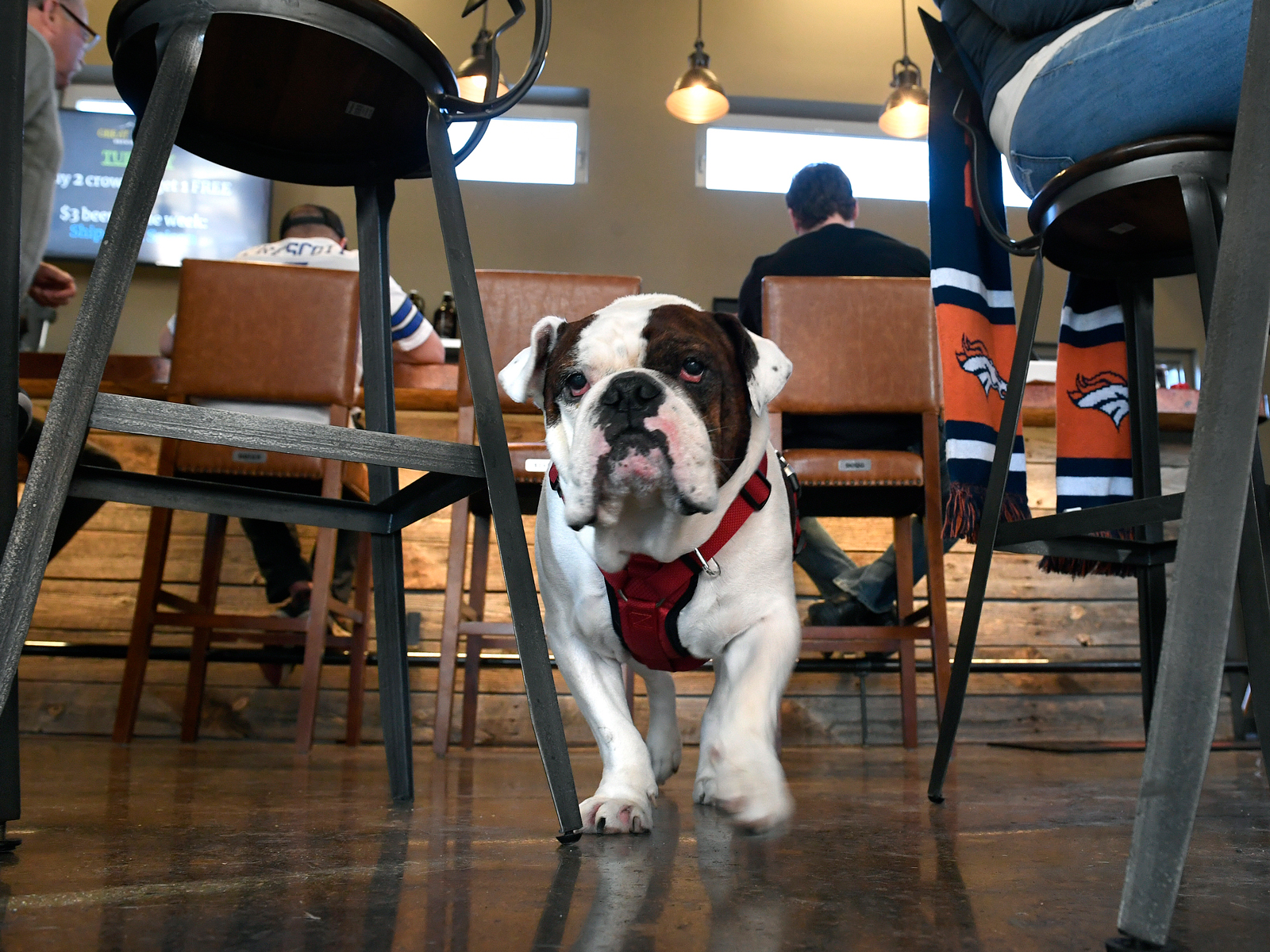 This Course Teaches Dogs How to Behave in Breweries