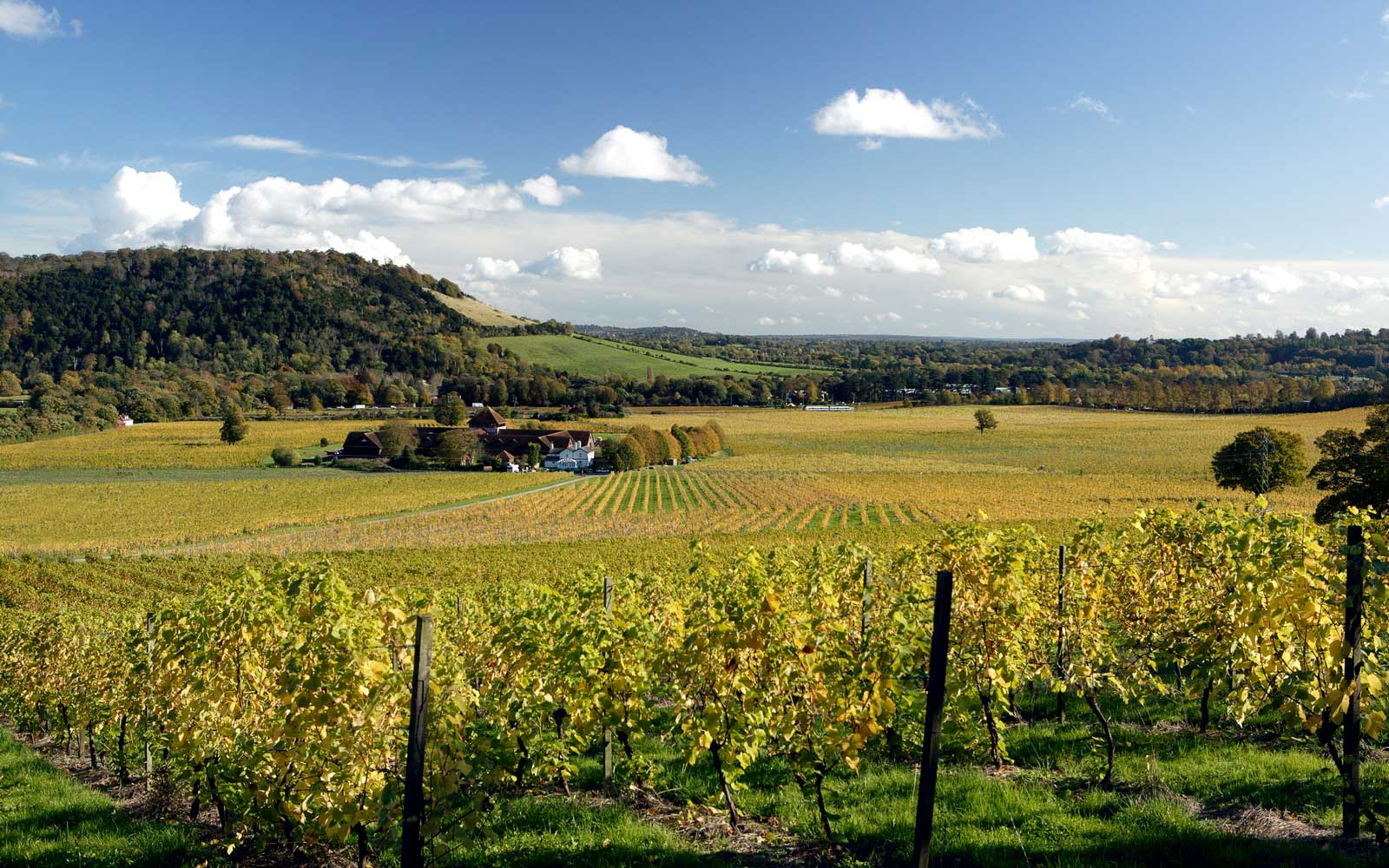Denbies Wine Estate, one of the largest privately owned vineyards in Europe, found in Dorking, Surrey.