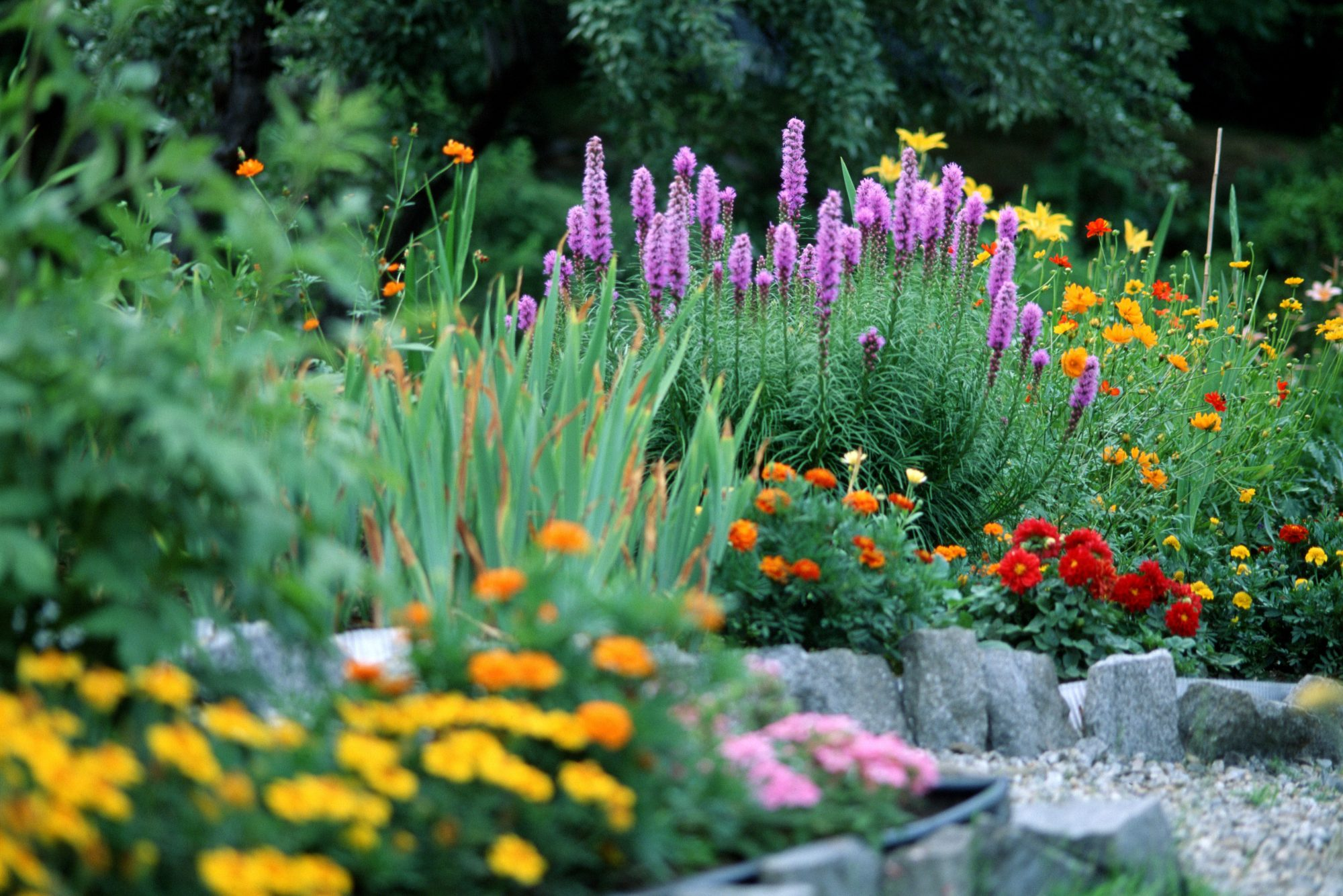 Companion Planting Can Help You Make the Most of Your Garden