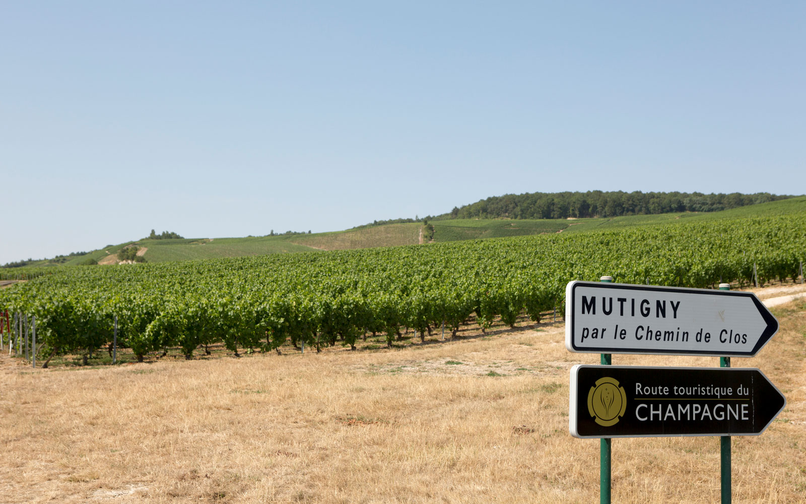 This Luxury Champagne Tour Is the Ultimate Bucket List Trip for People Who Love Bubbly