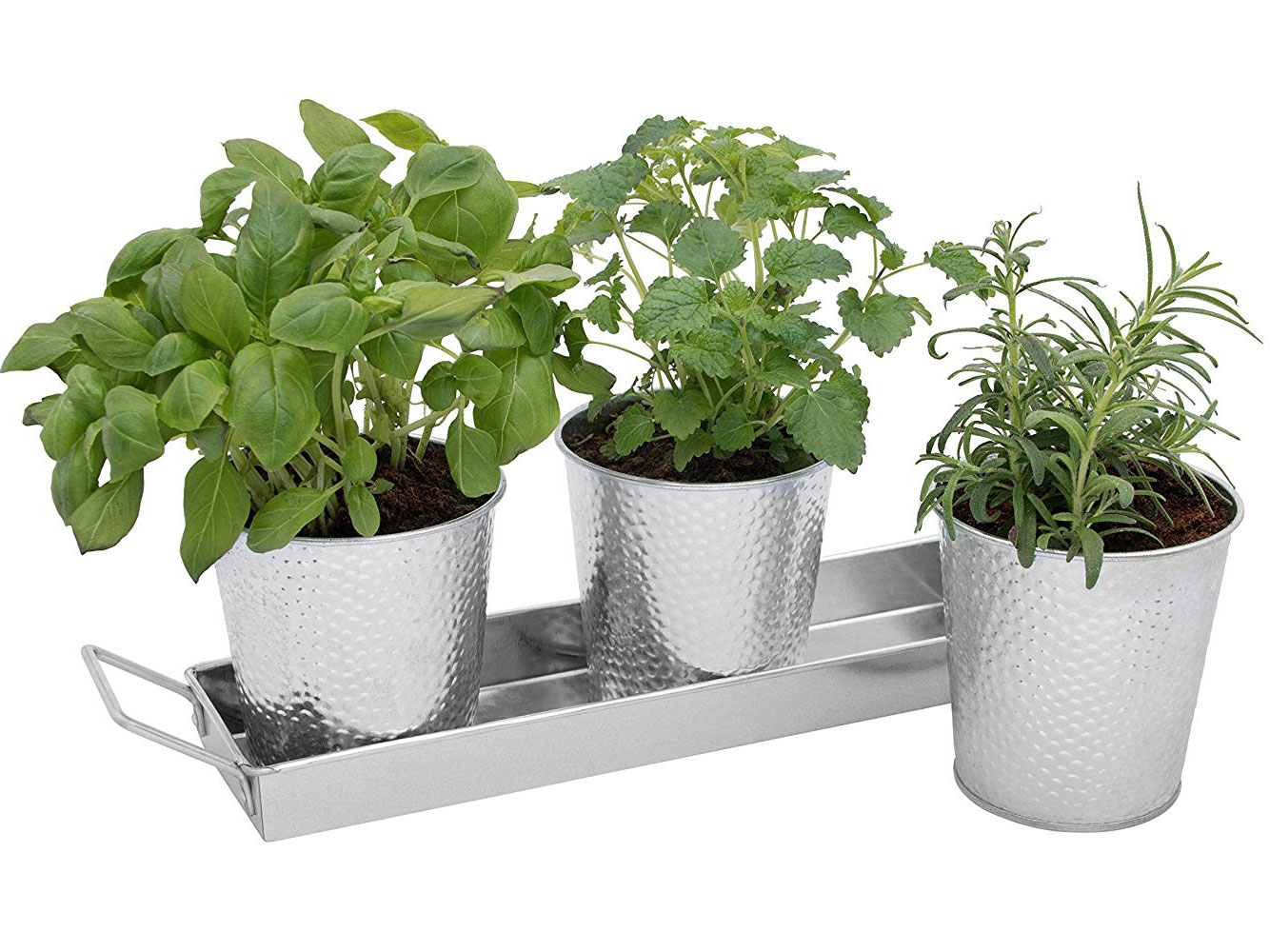 12 Essential Tools for Starting an Indoor Herb Garden
