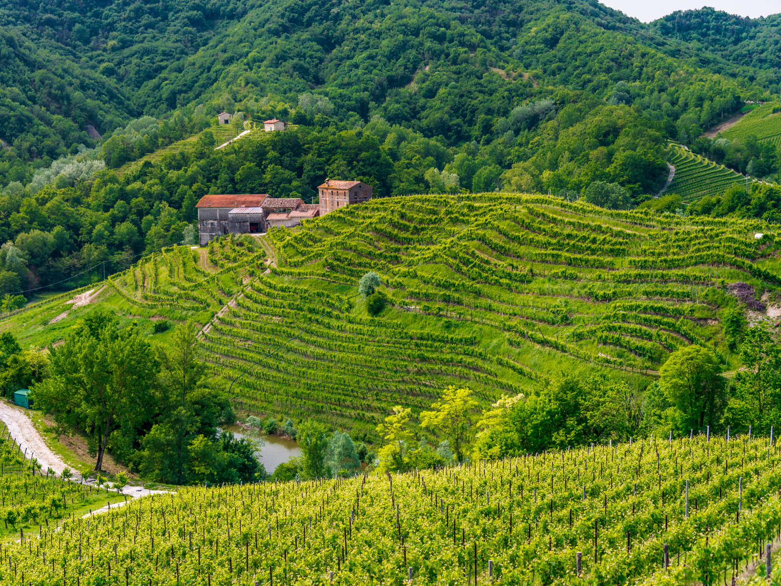 This Key Prosecco-Producing Region Is Now a UNESCO World Heritage Site
