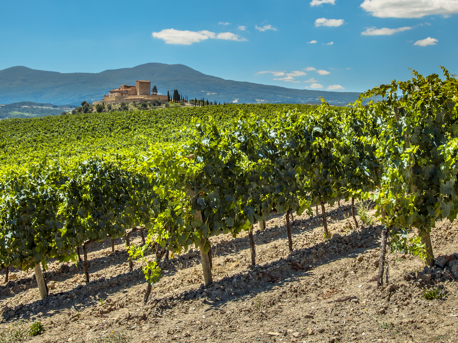 Italian Growers Place Three-Year Ban on New Pinot Grigio Vineyards