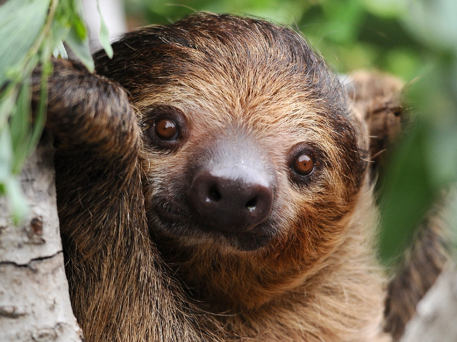 This Sloth Helped Make a Beer for the L.A. Zoo Called 'Slothen Brau'