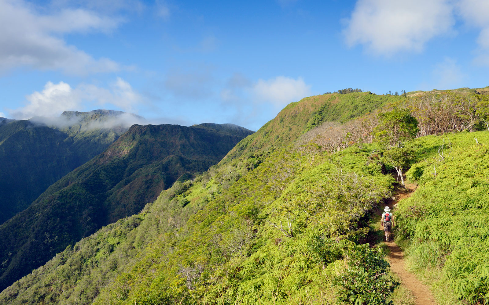 The 8 Best Maui Hikes for Stunning Views and Spectacular Wildlife