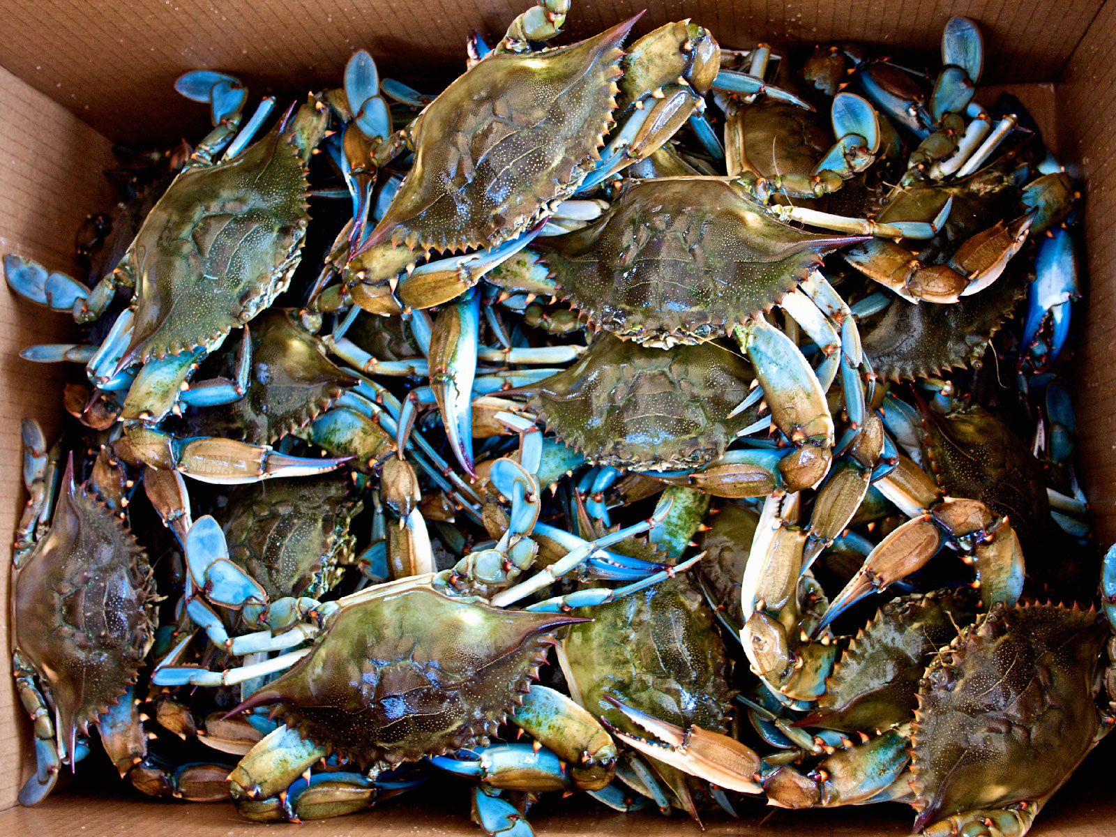 U.S. Seafood Supplier Admits to Mislabeling Over $4 Million Worth of Crab