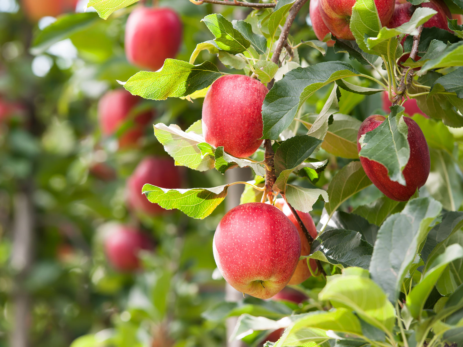Everything You Need for an Apple Picking Trip
