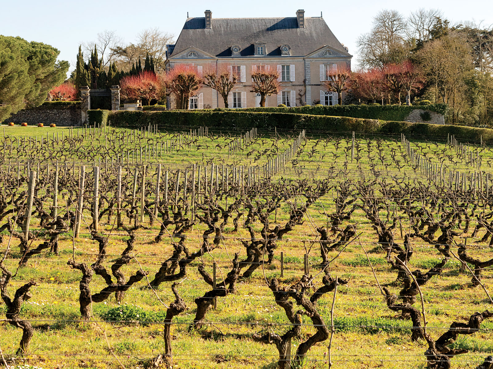 A Sommelier's Tour of France's Loire Valley