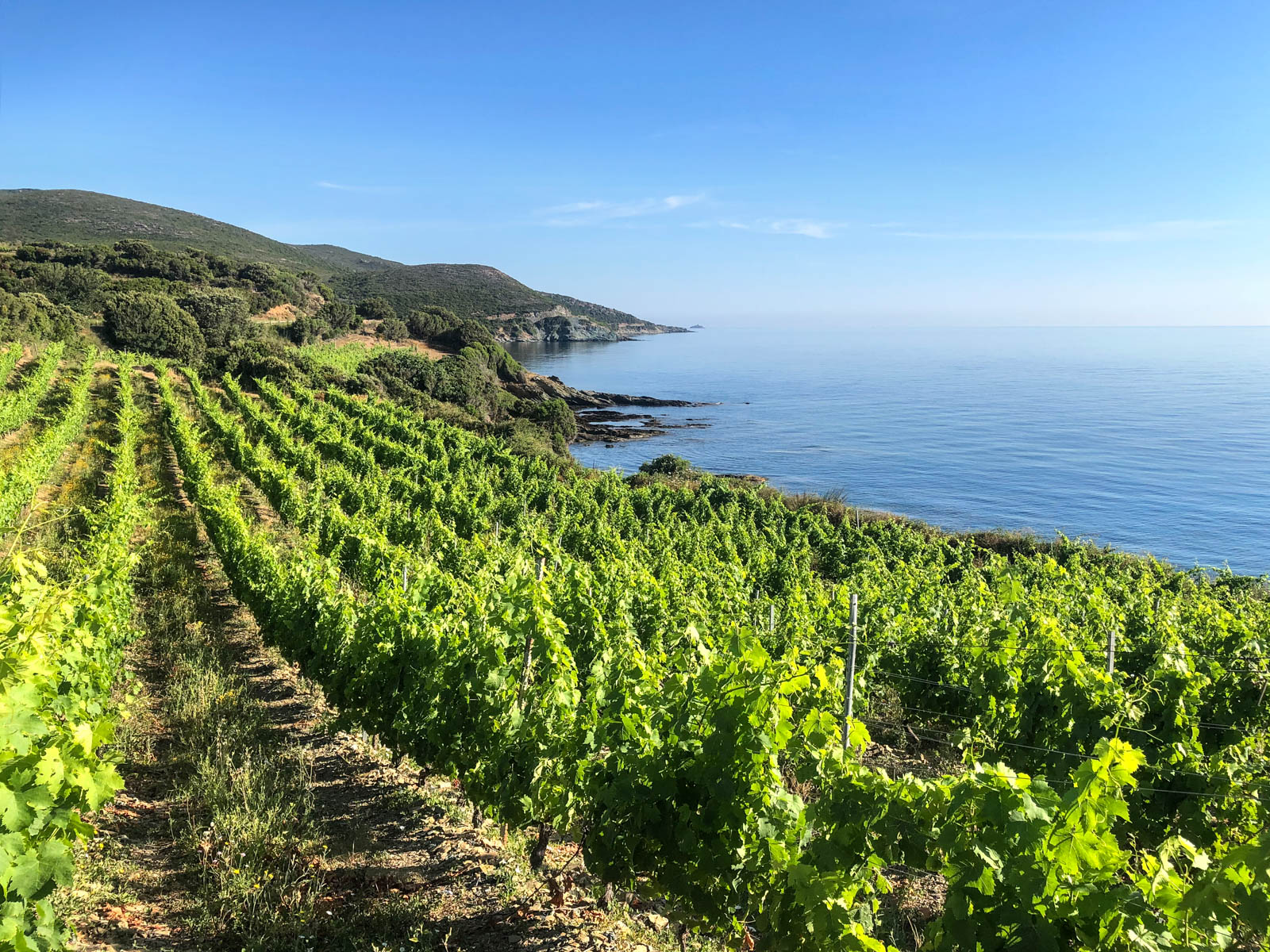 Corisca Wine Travel Guide: Where to Eat, Drink, and Stay