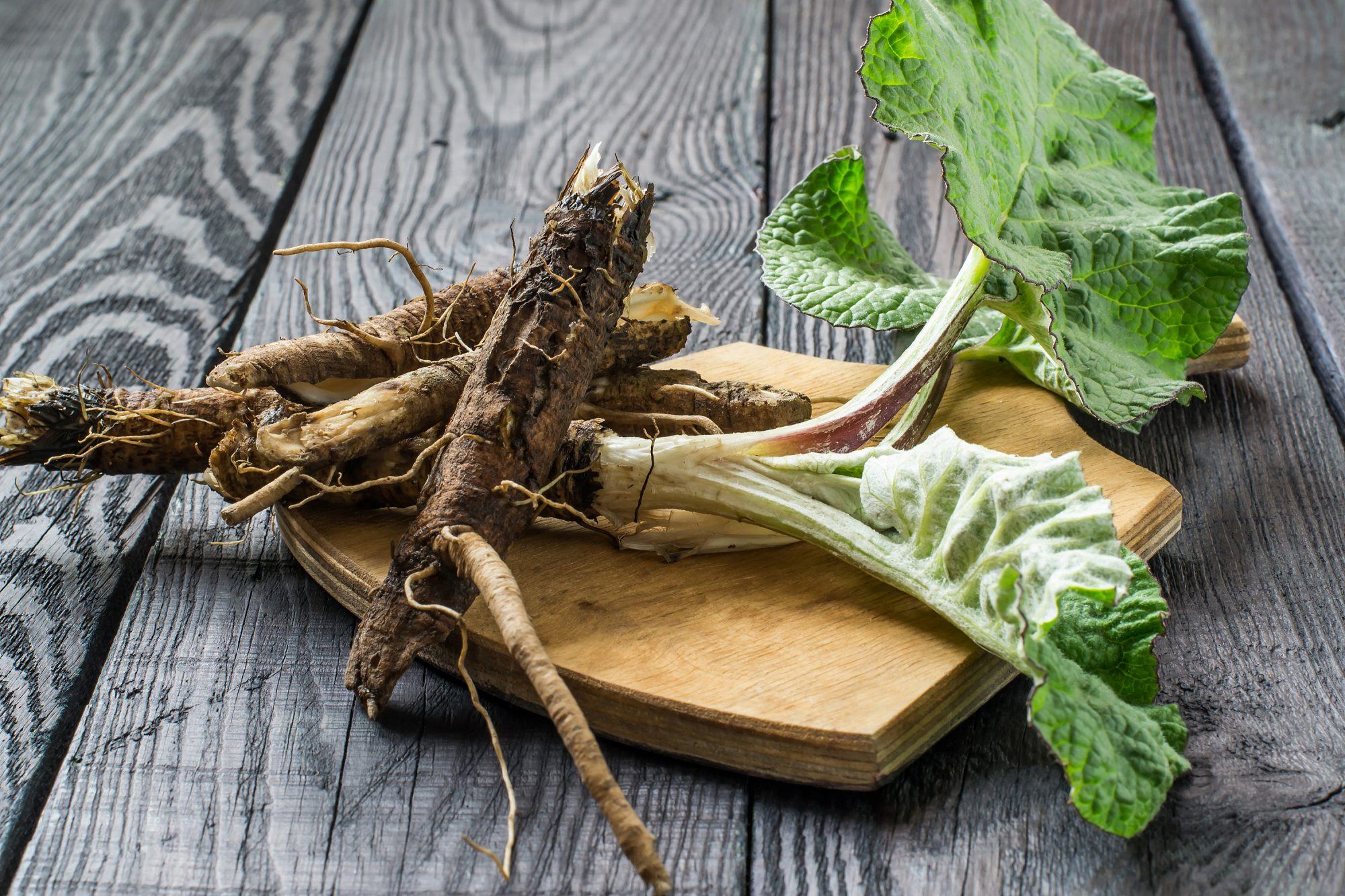 What Is Burdock Root and How Do You Use It?