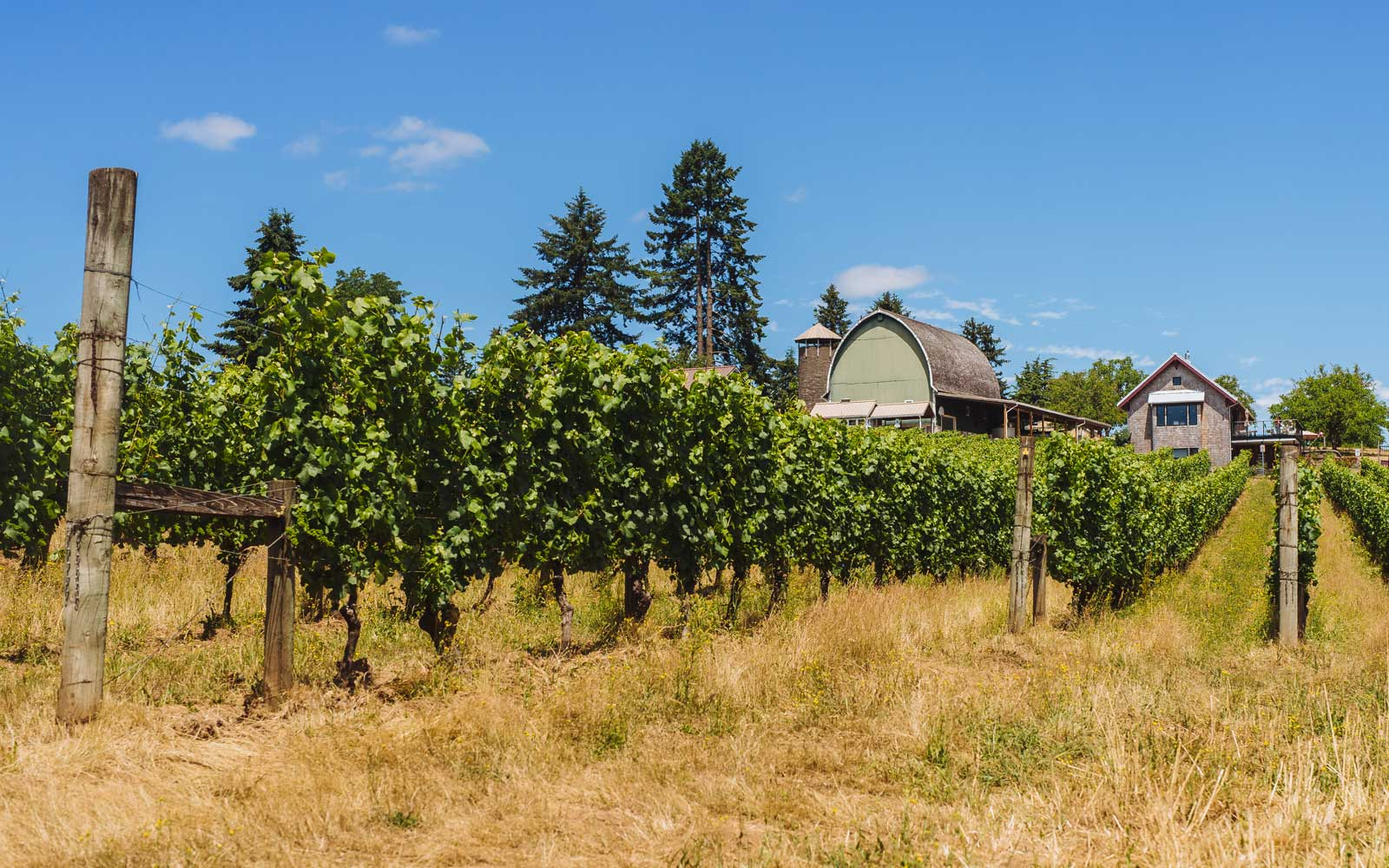 You Can Sip on Your Favorite Wines While Doing Yoga at These Oregon Wineries