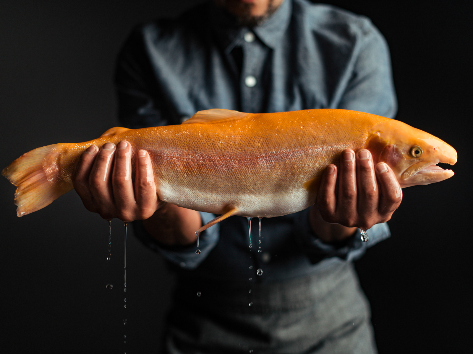 David E. Kelley Sustainable Trout Company Riverence Gold