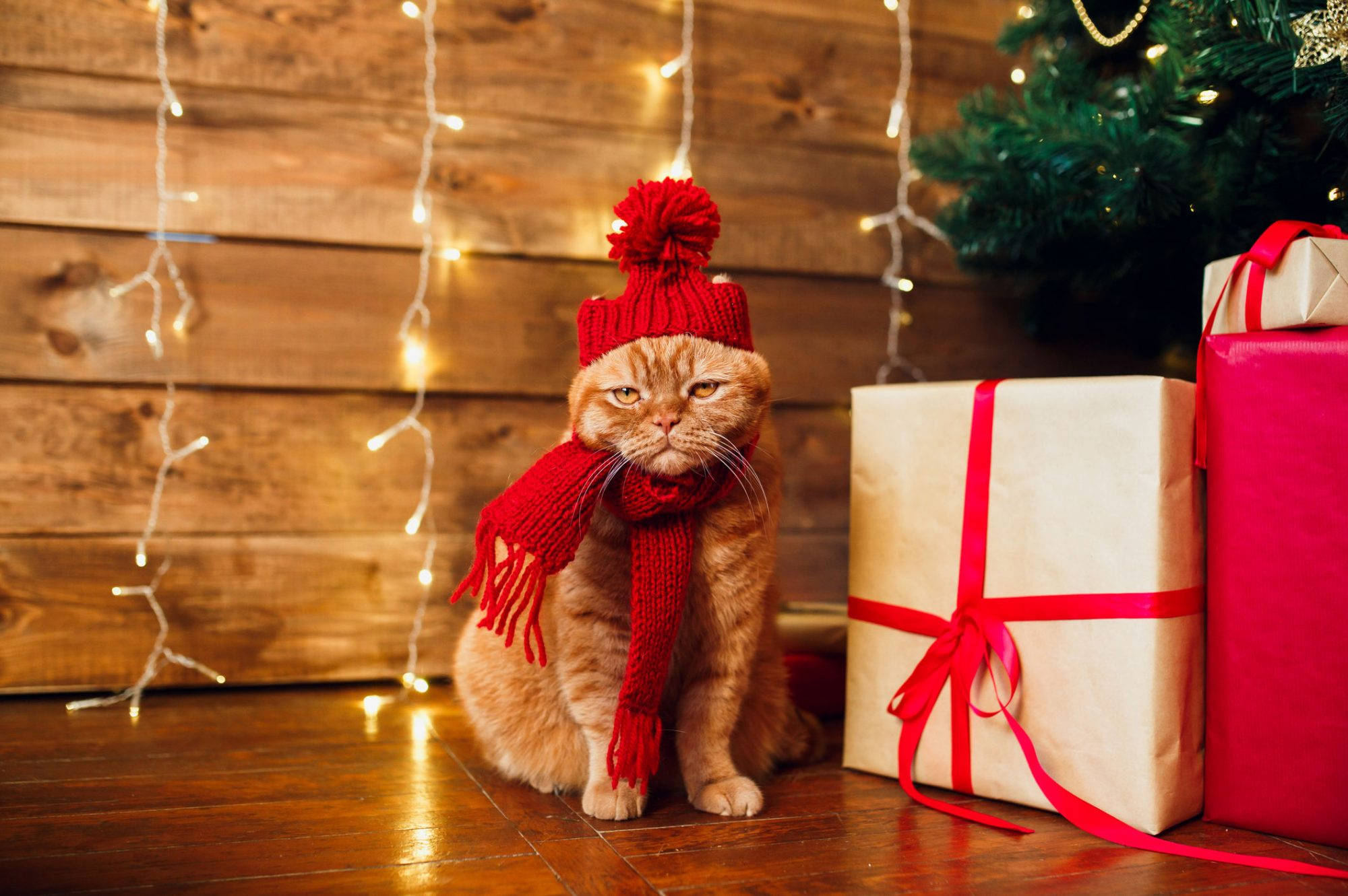 Christmas Cat in Hat and Scarf