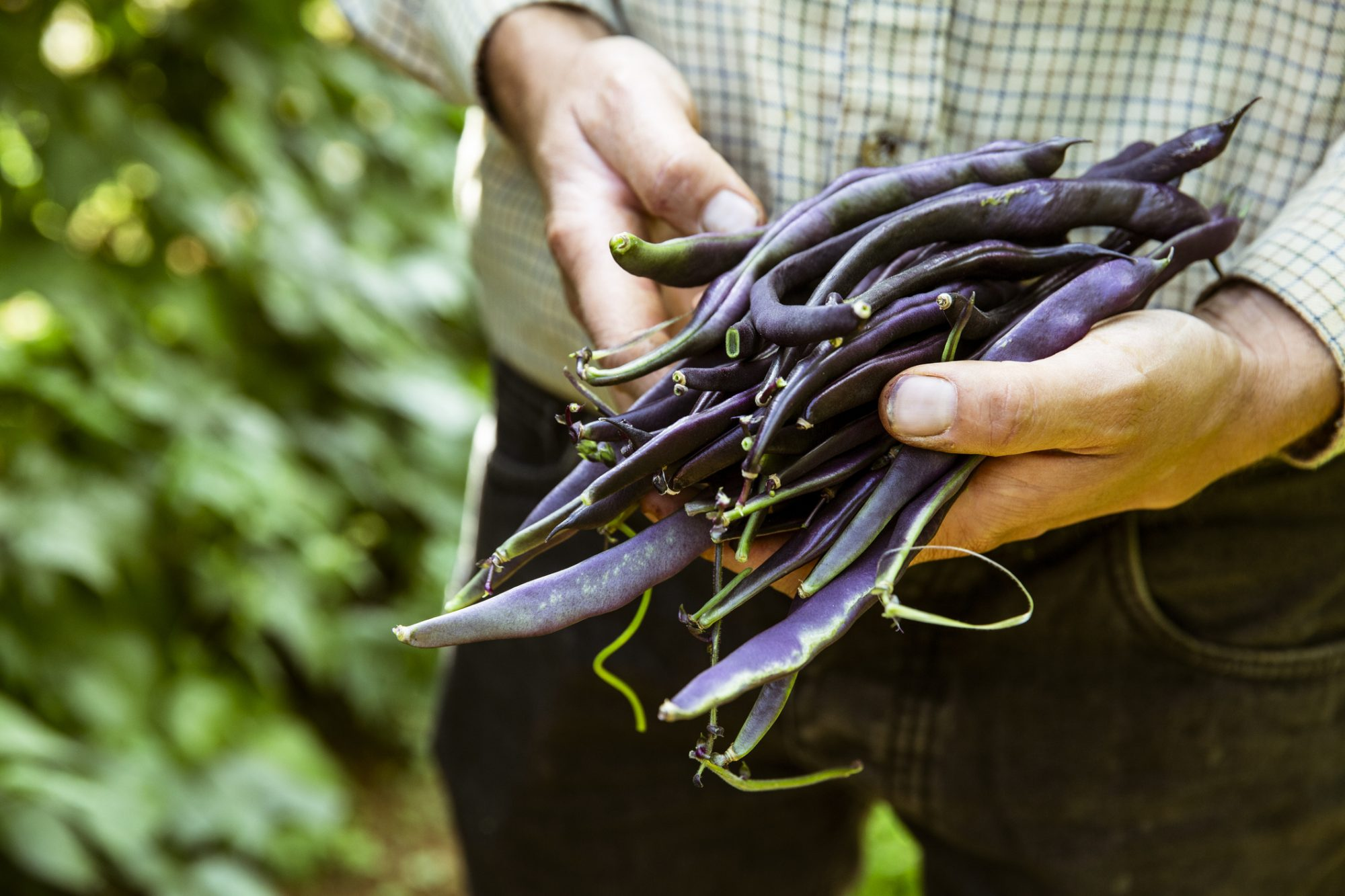What to Do With Fresh Beans