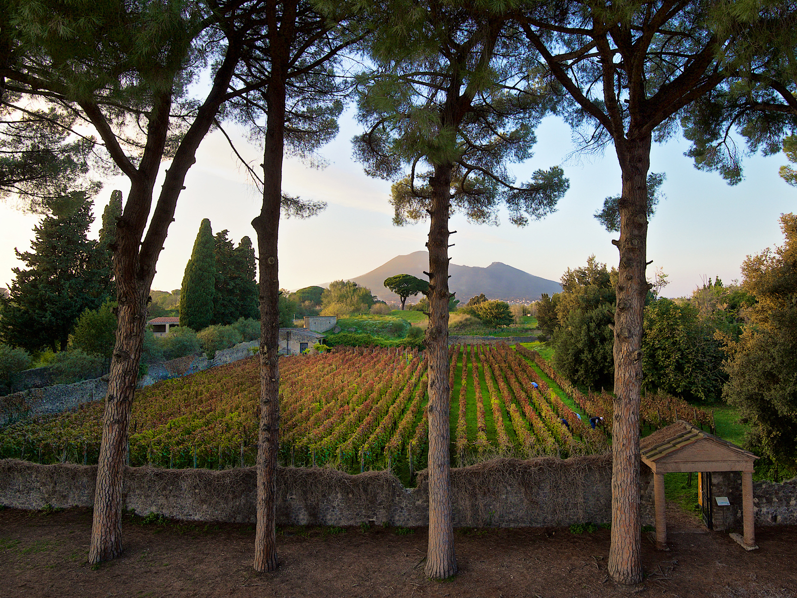 The Unknown Volcanic Wines of Pompeii