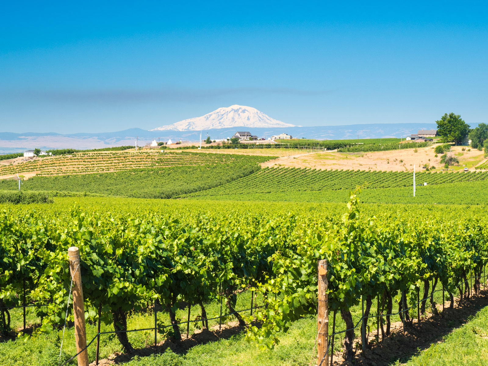 Washington Has Over 1,000 Wineries, and It's Just Getting Started