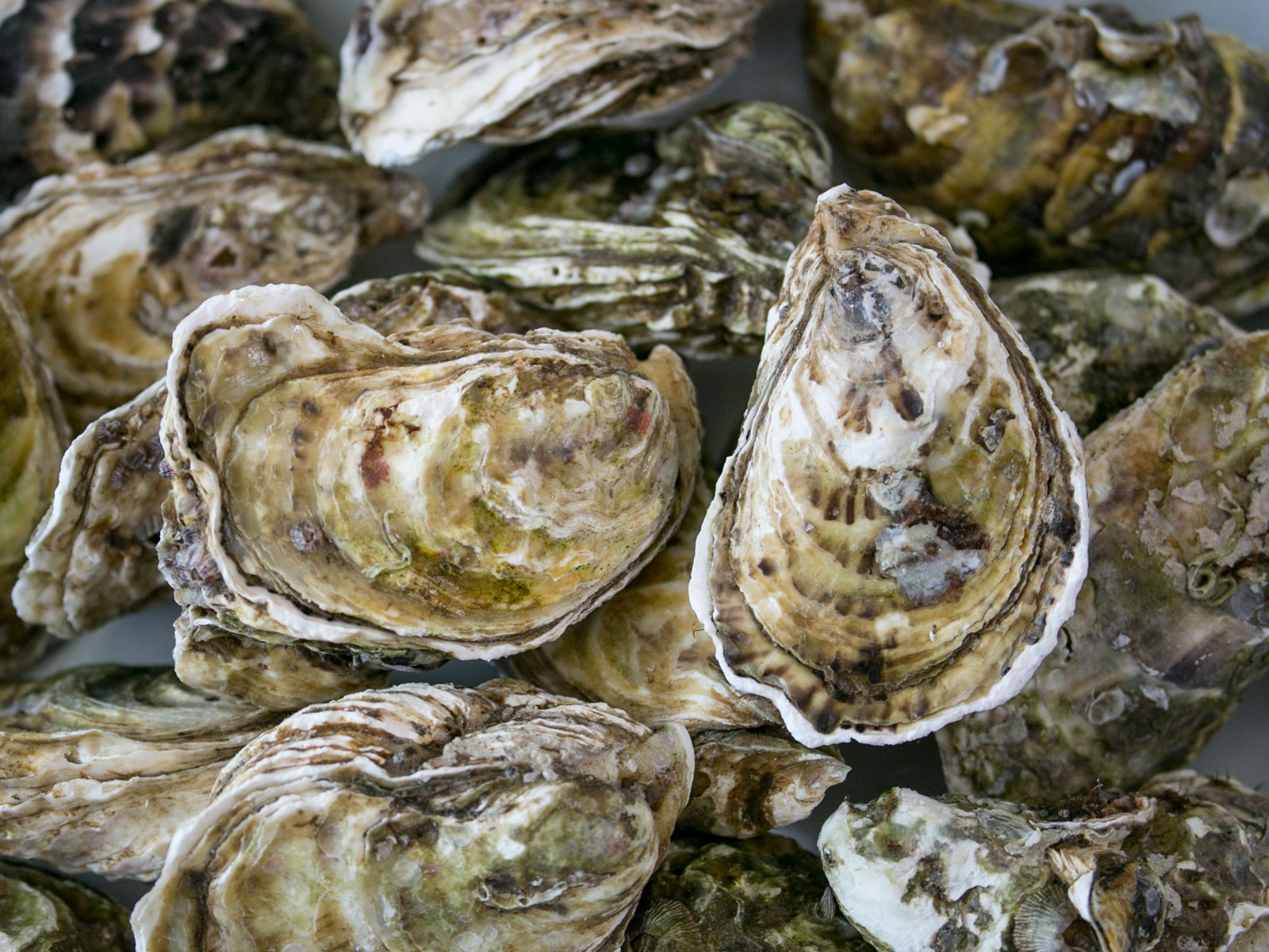 oyster-shell-gin-FT-BLOG1119.jpg