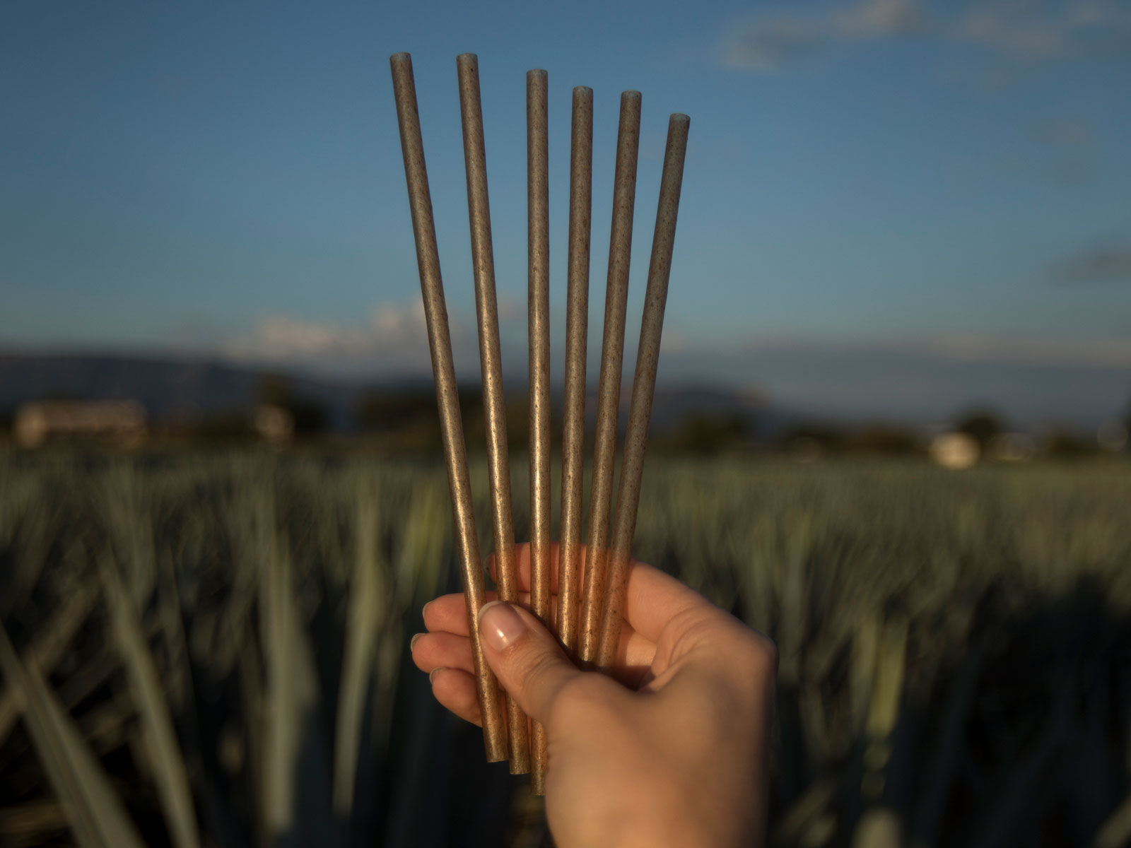 agave-straws-header-FT-BLOG1219.jpg